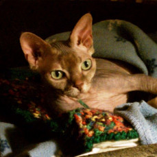 Heating pad, blankets, oh my! - Pets Remembered