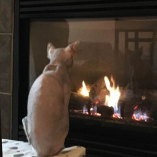 Naked kitties get cold. - Pets Remembered