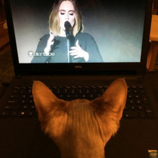 Gabs loves Adele. - Pets Remembered