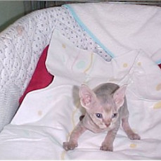 Gabby at 4 weeks old - Pets Remembered