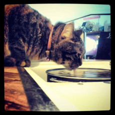 - Clock Timeless Pets | Pet Crematory | Urns | Pet Loss
