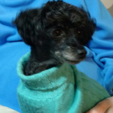 And Mom's velcro puppy, Cuddles.  Aunt Jeannie - Mom sure loved her! - Joyce Funeral Home
