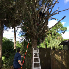 Linda up in a tree - Sue Fitzsimmons