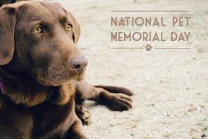 Pet Memorial Day