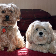 Tucker and Molly - Sue Kirchoff