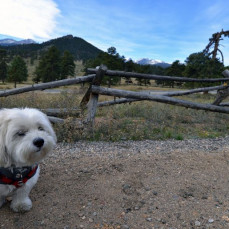 Molly at Rocky Mountain National Park in 2013 - Sue Kirchoff