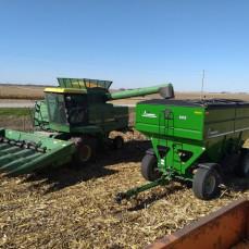 Harvest 2018 - Phil K.