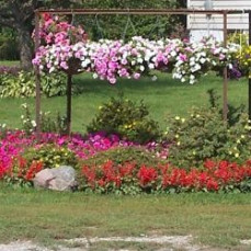 Natalie's front yard  - Steve Sorenson