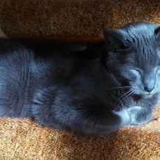 Missing our little gray guy... - Sharon and Todd Sens