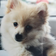 Kerry's puppy - Therese