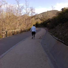 Walking the