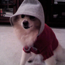 Dog in the hood - Therese