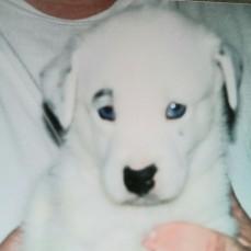 - Bing as a puppy
