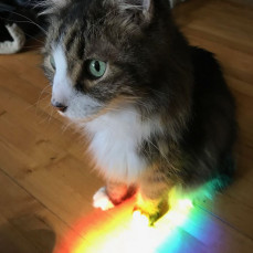 Krazy liked rainbows. - Jeffrey Ruha