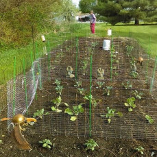 Jody gardening  (Spring of 2019) - Dorothy Parker