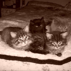 Laverne, Shirley, Shadow & Merlin - Dorothy Parker